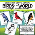 28 large bird flashcards for vocabulary, recognition, make matching and memory games.