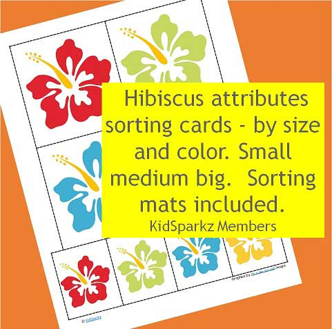 Hibiscus attributes sorting cards - by size and color.