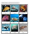 Ocean animals matching activity