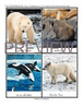 Arctic Animals flashcards - 12 large photo flashcards/color