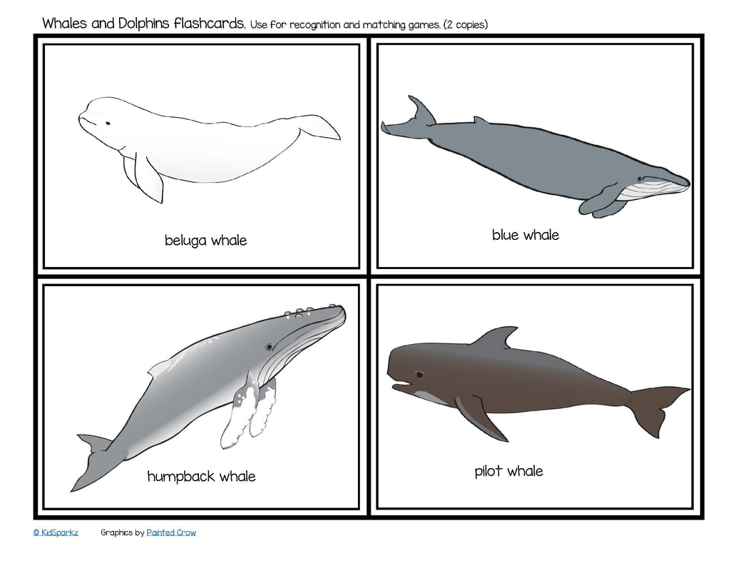 Whales and dolphins flashcards (12)
